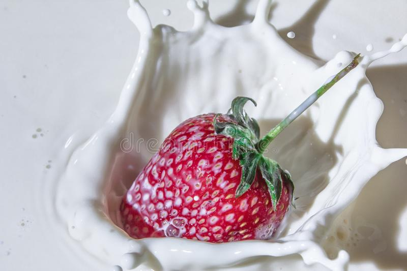 Delicious strawberries in cream. Sweet and delicious still life. Subject photo. advertising photography. strawberries and milk. red on white. frozen movement royalty free stock photos