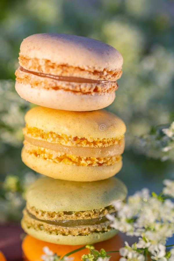 Delicious sweet airy color french pastries. Dessert sweets macarons. And meadow white flowers in the summer evening in the orchard. Natural blurred background stock photo
