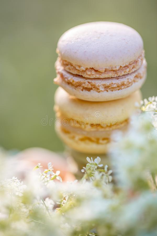 Delicious sweet airy french pastries. Dessert sweets macarons. And meadow white flowers in the summer evening in the orchard. Natural blurred background. Image royalty free stock image