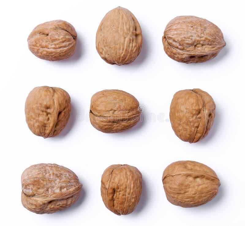 Delicious walnut stock image
