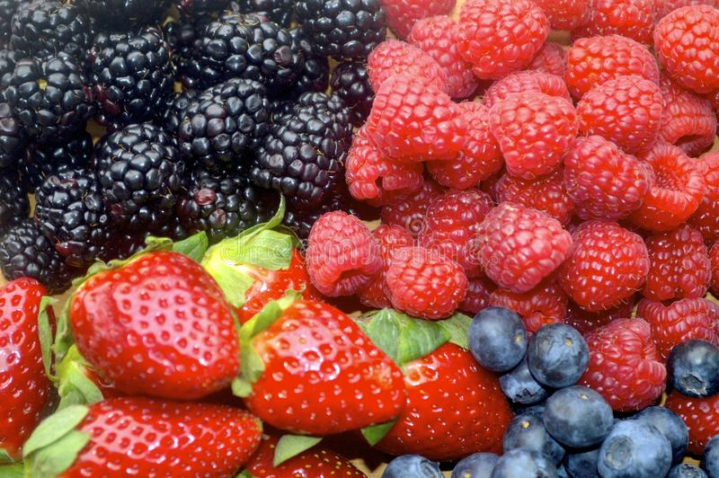 Deliciously Vibrant Berries stock images