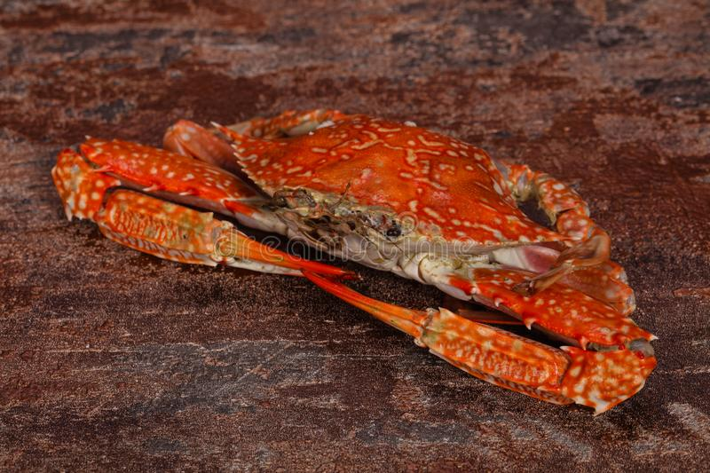 Boiled crab - ready for eat royalty free stock photos