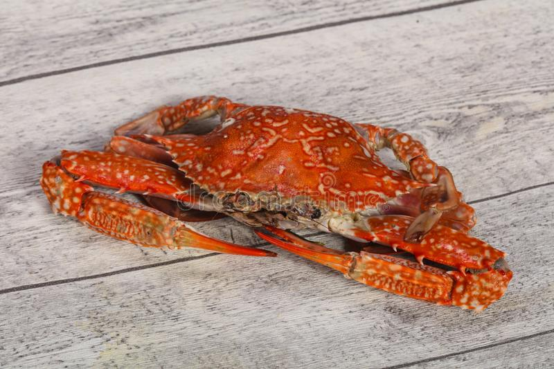 Boiled crab - ready for eat stock photos