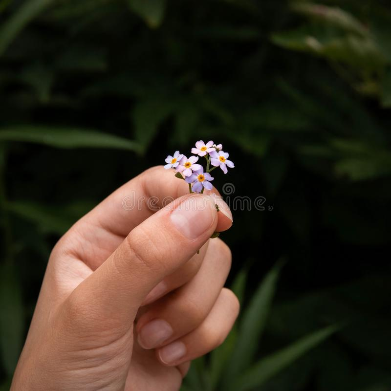 Delightful flower in the hand. Detailed, hd and high-quality photo, pic royalty free stock photo