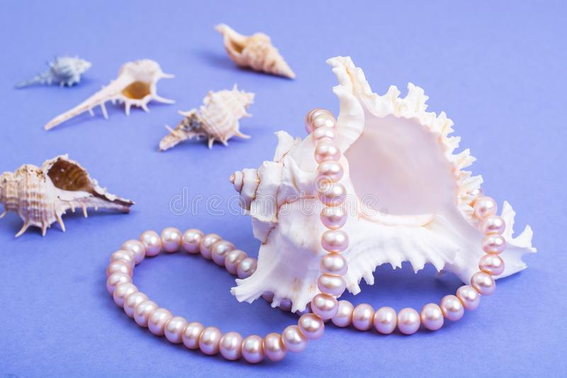 Delightful pearl necklace stock photos