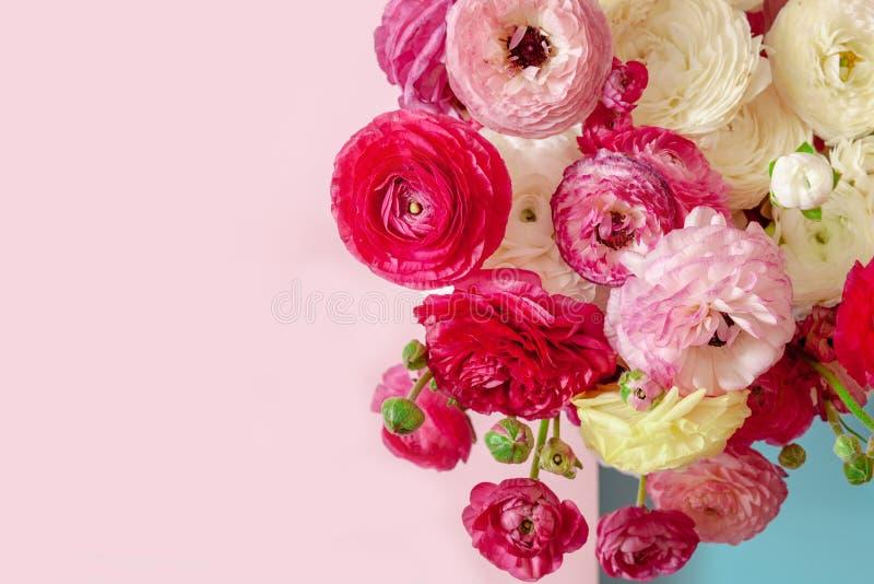 Delikat blom- bakgrund av rosa ranunculusonpink och blå bakgrund, romantisk bakgrund för att gifta sig inbjudningar och hälsni arkivbild