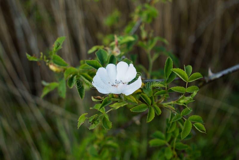 Delikat blomma på sjösidan royaltyfri fotografi