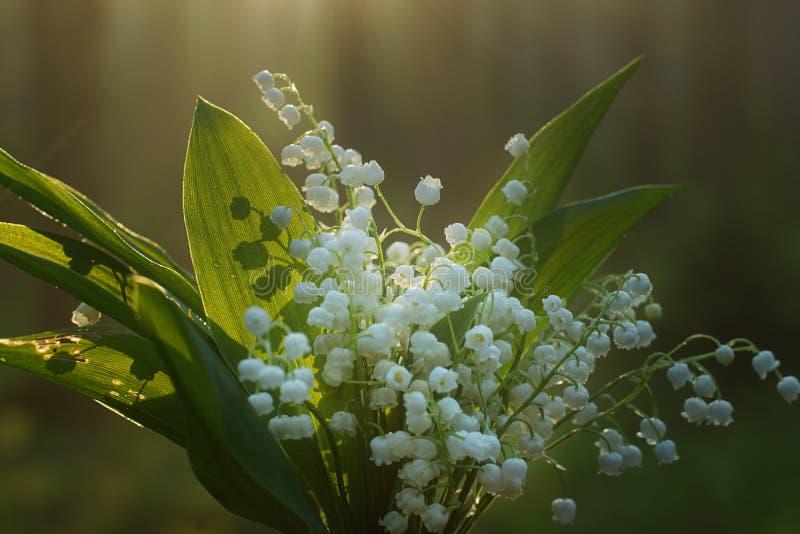 Delikat bukett av liljekonvaljer med daggdroppar på gröna sidor royaltyfri fotografi