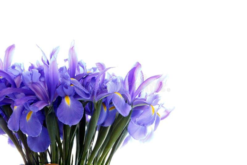 Delikat härlig bukett av irins och andra blommor royaltyfria foton