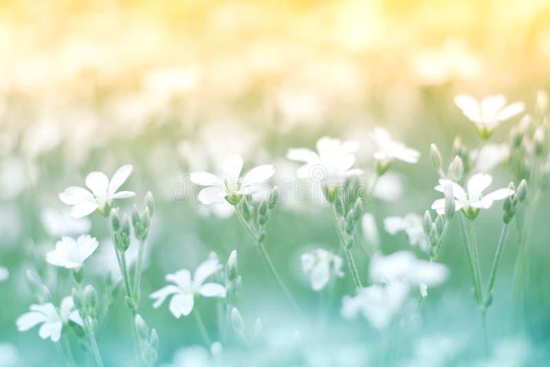 Delikat liten vit blomma på en härlig bakgrund med en försiktig signal Färgrik blom- bakgrund fotografering för bildbyråer