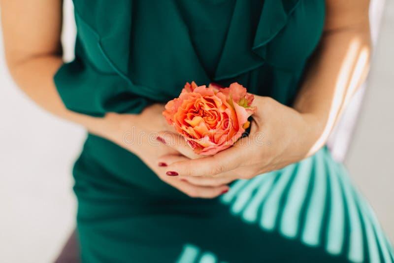 Delikat persikafärgknopp av rosen i kvinnahand på grön bakgrund arkivfoto