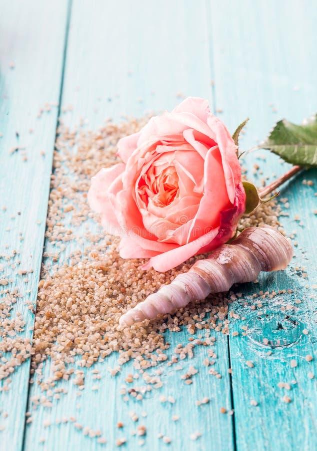 Delikat rosa färgros och snäckskal på säng av korn royaltyfri bild