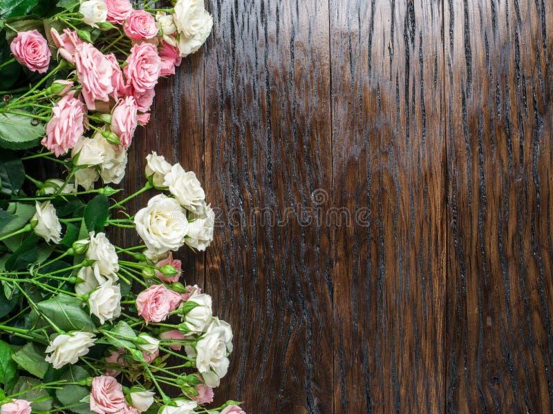 Delikata nya rosor royaltyfri foto