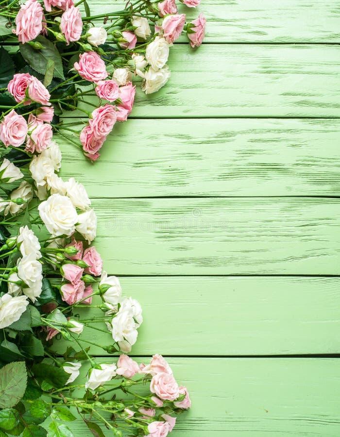 Delikata nya rosor på den gröna träbakgrunden arkivbild