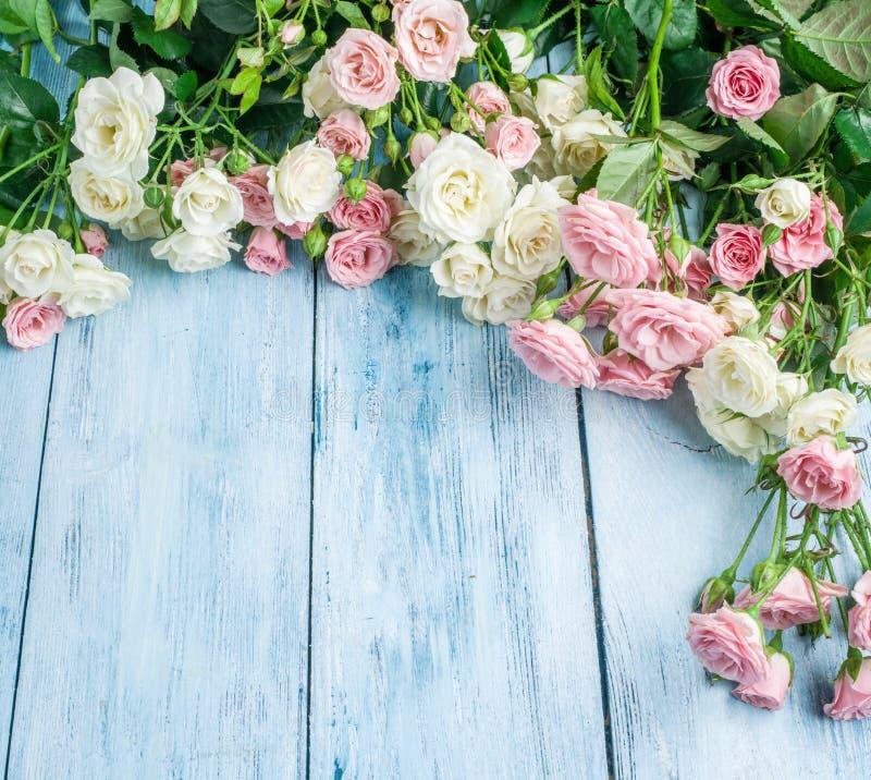 Delikata nya rosor på en blå träbakgrund royaltyfria foton