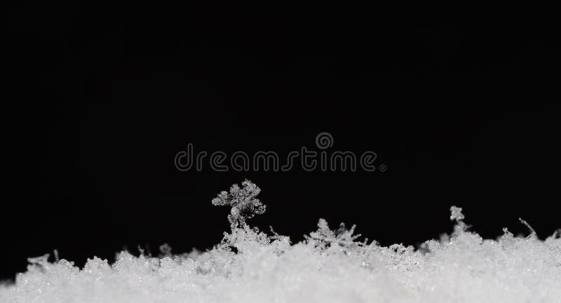 Delikata strukturer i snösvartpanorama royaltyfri foto