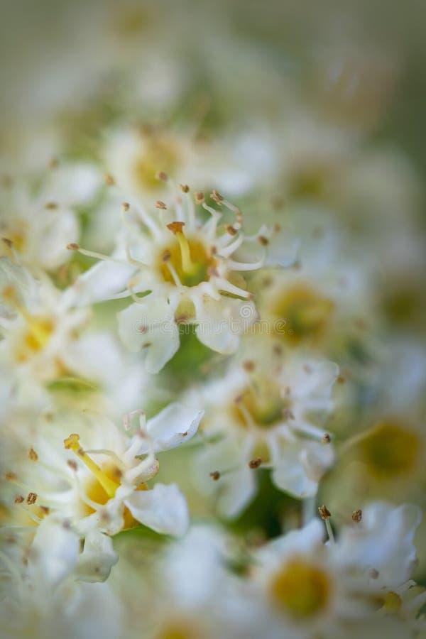 Delikata vita blommor med grunt djup av fältet royaltyfria bilder