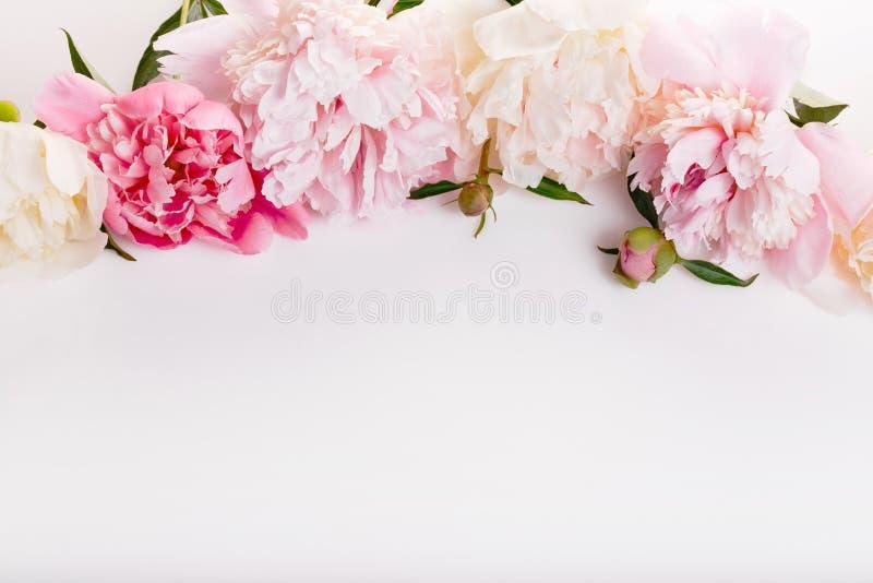 Delikatna biel menchii peonia z płatków kwiatami i biały faborek na bielu Zasięrzutny odgórny widok, mieszkanie nieatutowy kosmos zdjęcia stock