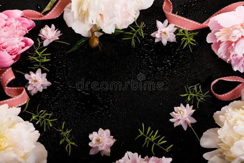 Delikatna biel menchii peonia z płatków kwiatami i biały faborek na czerni Zasięrzutny odgórny widok, mieszkanie nieatutowy kosmo obraz royalty free