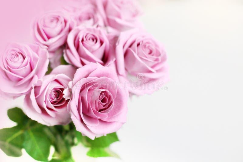 delikatne róże obrazy royalty free