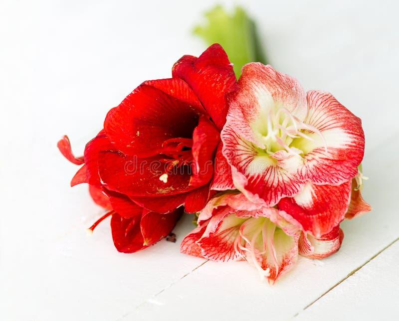 Download Delikatni Kwiaty Dla Specjalnej Okazi Zdjęcie Stock - Obraz złożonej z dekoracje, target171: 28953006