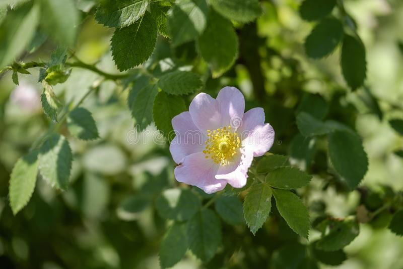 Delikatni wiosna kwiaty 1 zdjęcia royalty free