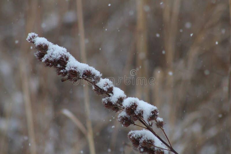 Delikatny śnieg zdjęcie royalty free