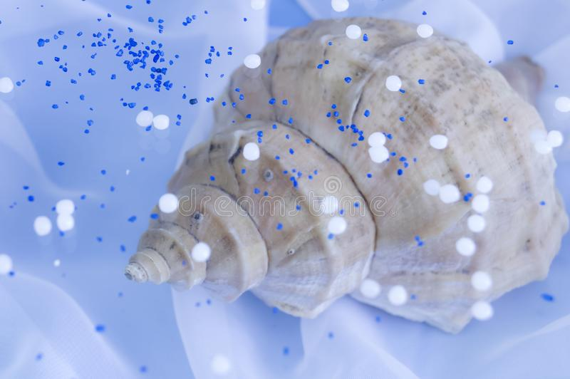 Delikatny błękitny tło z wielkim seashell fotografia stock
