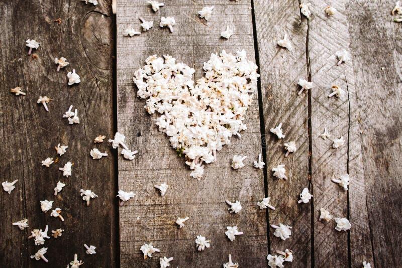 Delikatny biały kierowy kształt kwitnie na drewno stole fotografia royalty free