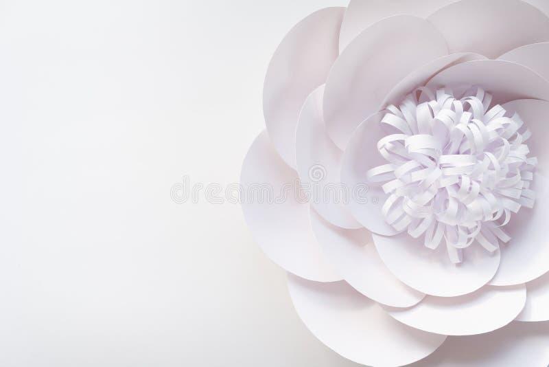 Delikatny biel róży zakończenie up zamazywał abstrakcjonistycznego tło ilustracji