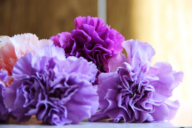 delikatny bukiet goździki w bzu, purpur i menchii kolorach, zdjęcia stock