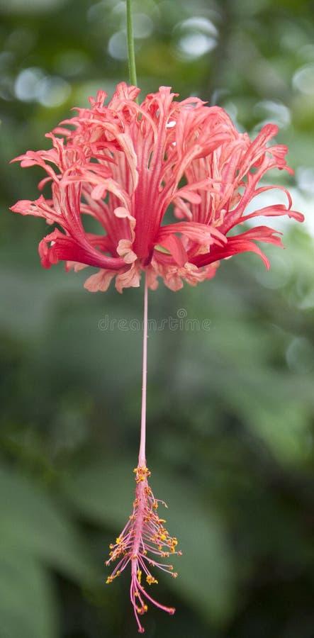 delikatny Eden kwiatu projekt zdjęcia stock