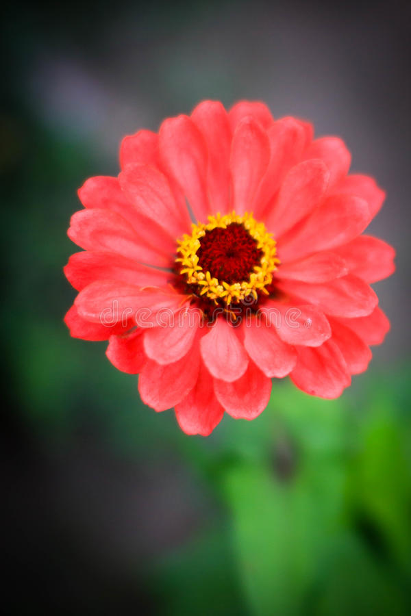 Delikatny i czarujący kwiat zdjęcie royalty free