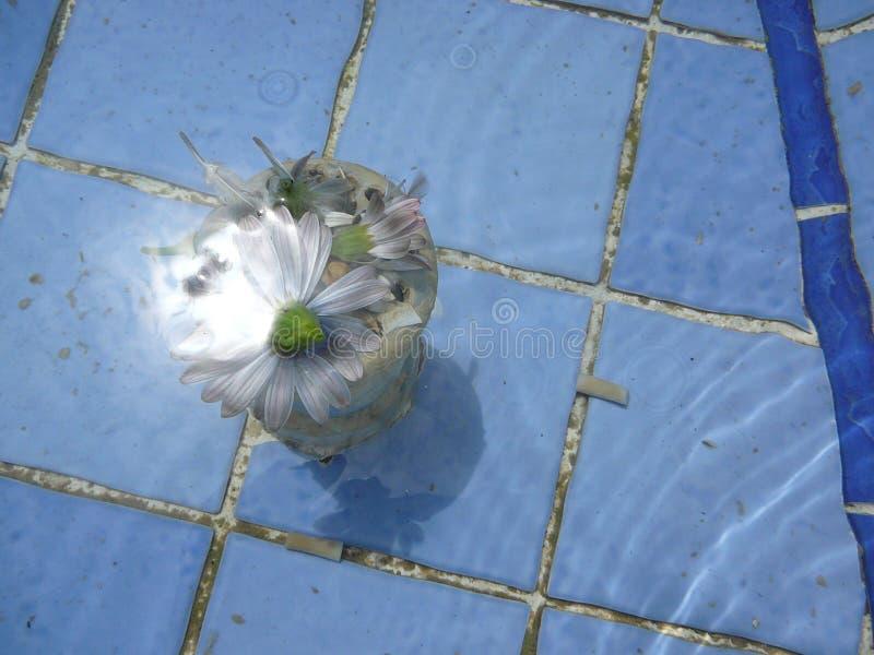 Delikatny kwiat zanurzający w fontannie zdjęcia stock