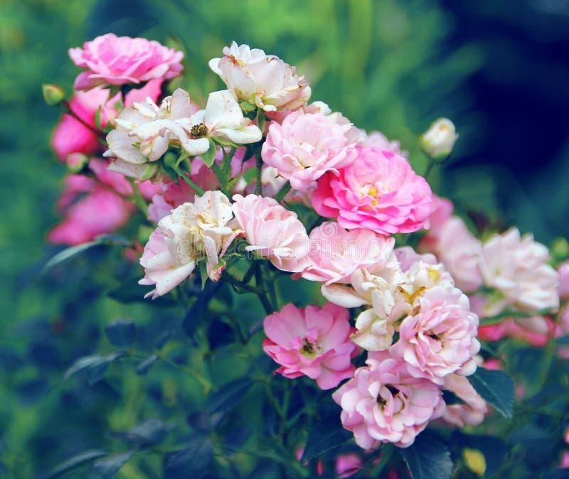 Delikatny menchii i bielu bukiet kwiaty fotografia stock