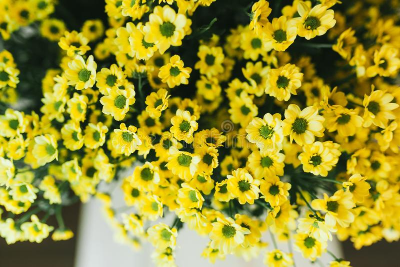 Delikatny pi?kny bukiet kwiaty zamkni?ci w g?r? zdjęcia royalty free