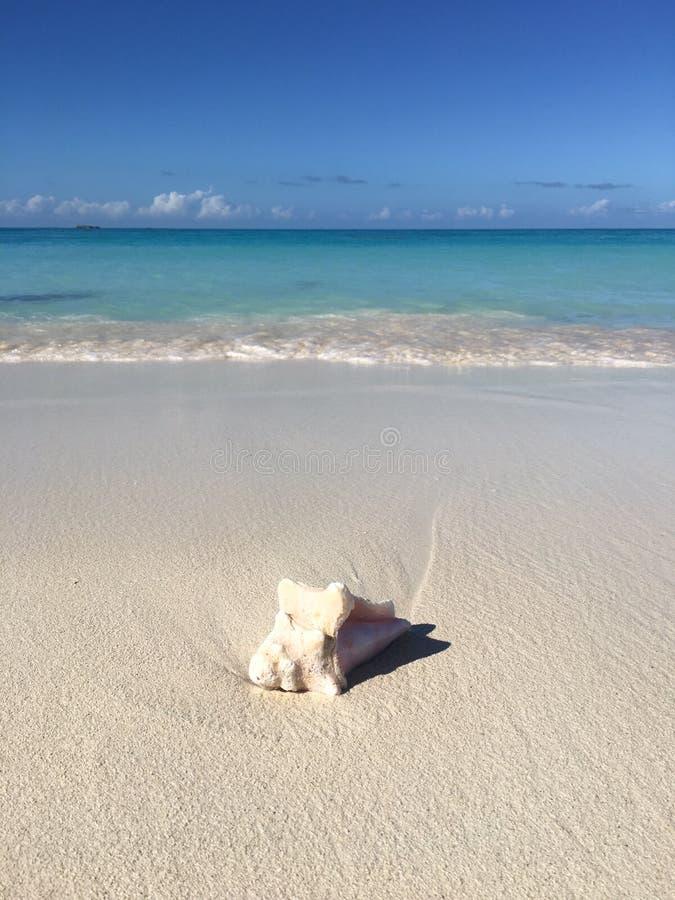 Delikatny Seashell na osamotnionej białej piasek plaży zdjęcia stock