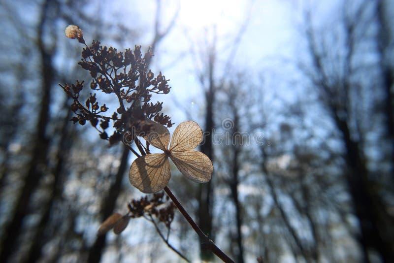 Delikatny suchy kwiat z li??mi deseniuje naturalnego na niebieskiego nieba t?a makro- fotografii fotografia royalty free