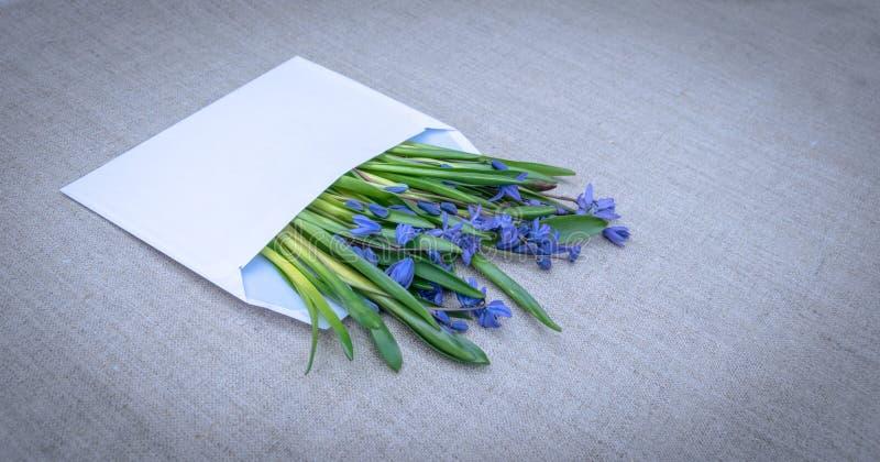 Delikatny wiosny kartka z pozdrowieniami niebieskie wildflowers fotografia stock
