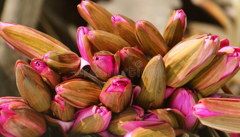 Dell'acqua mazzo lilly, bello fiore immagine stock