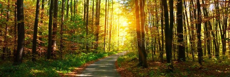 3:1 dell'insegna Foresta di autunno con il sentiero per pedoni che conduce nella scena Raggi di luce solare attraverso i rami di  immagini stock
