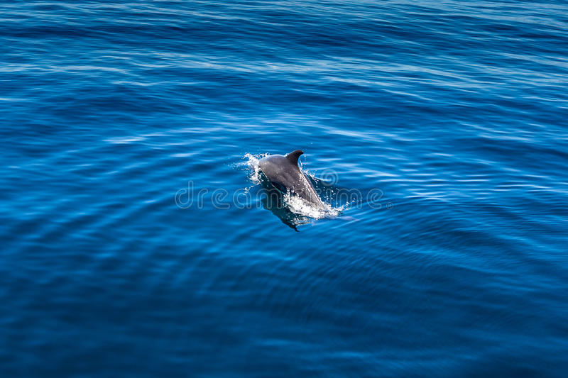 Delphin stockfotos