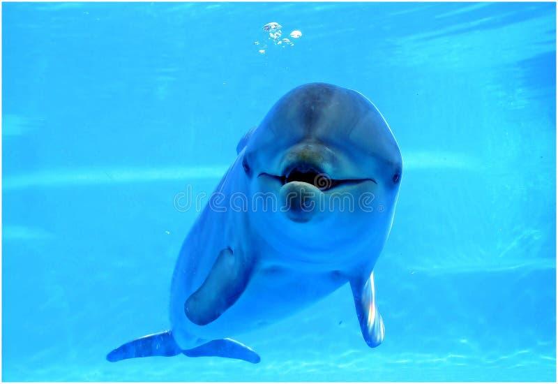 Delphin, der die Kamera betrachtet lizenzfreies stockfoto