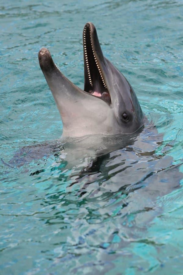 Delphin-Lächeln lizenzfreies stockfoto