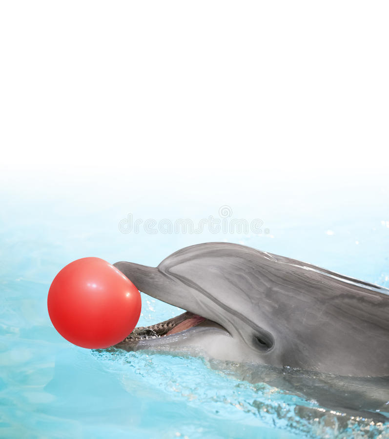 Delphin mit Ball lizenzfreie stockfotos