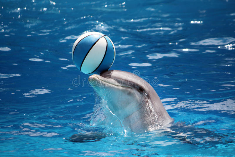Delphin mit Kugel stockfoto