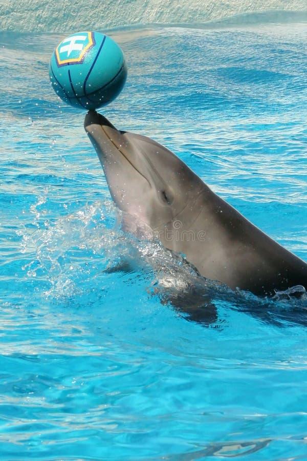 Delphin mit Kugel stockfotografie