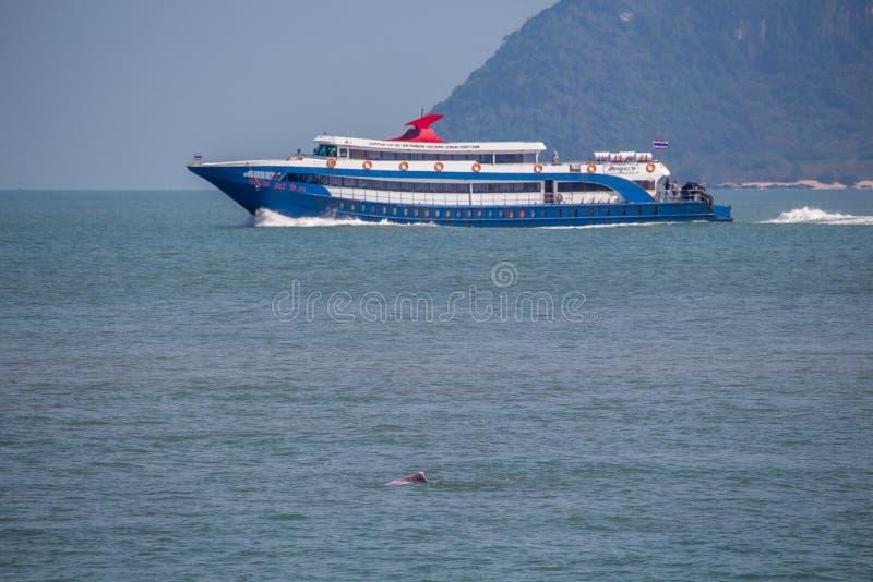 Delphin und Fähre Thailand stockfotos