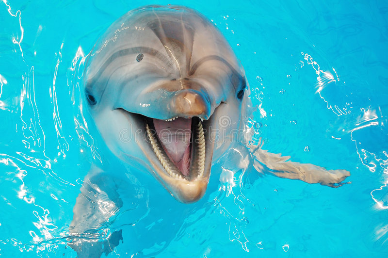 Download Delphine stock photo. Image of sunshine, performing, flipper - 6063248