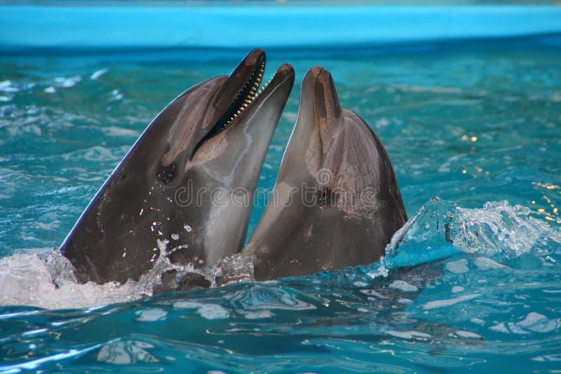 delphine stockfotos